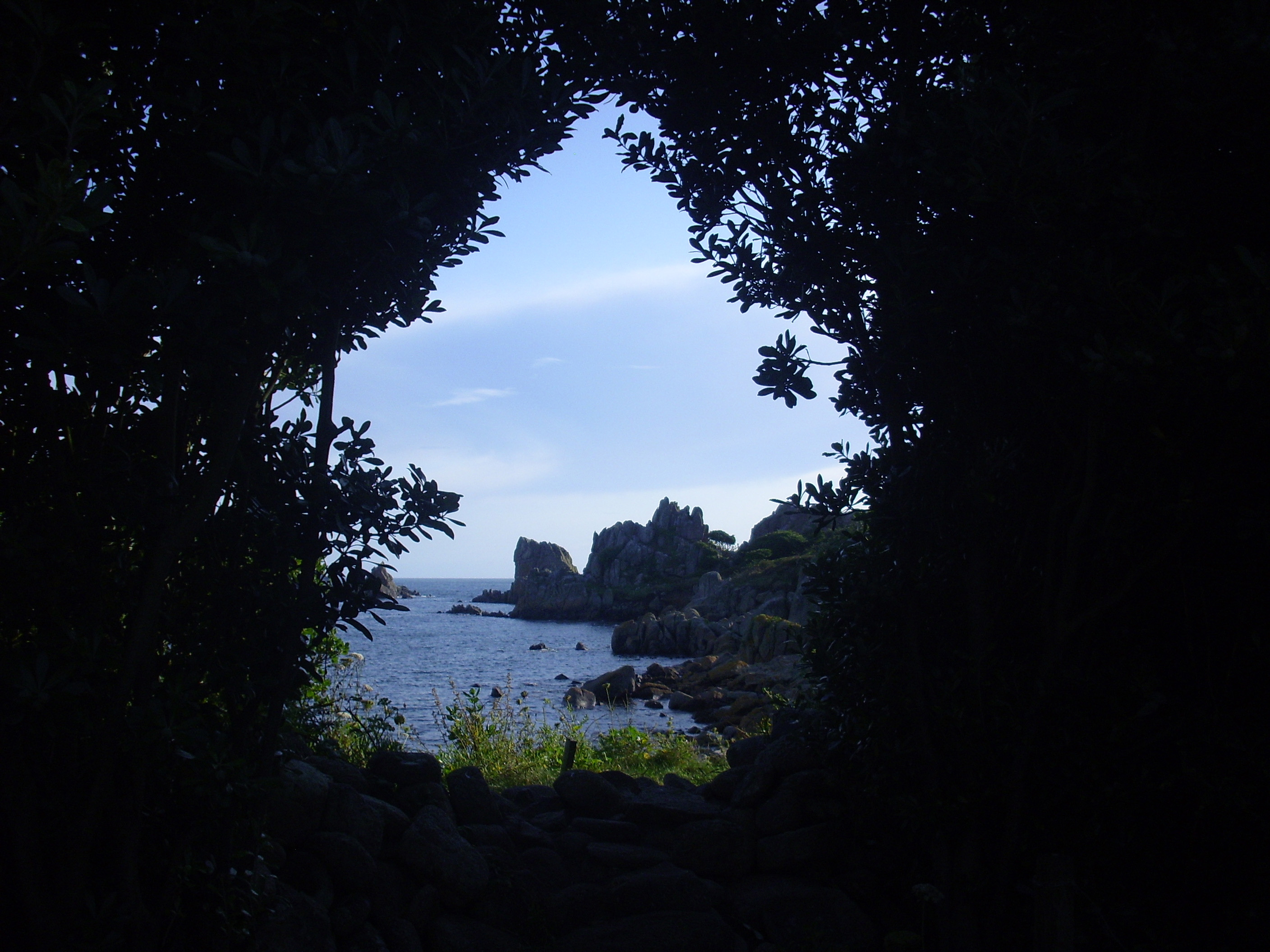 Scilly View through Dark Trees 2